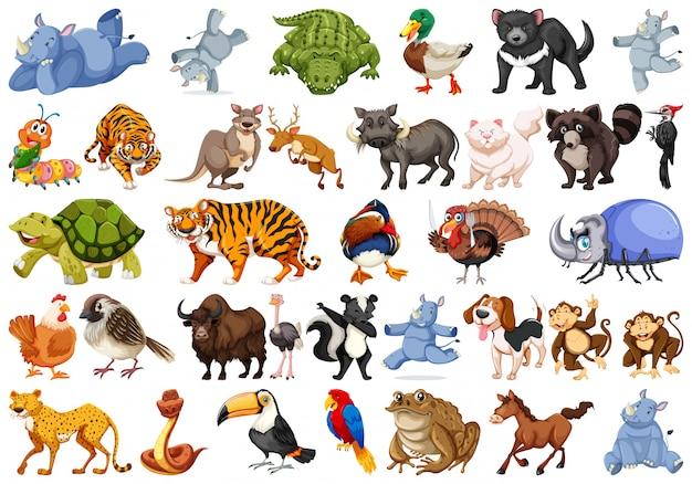 Set di set di animali Vettore gratuito