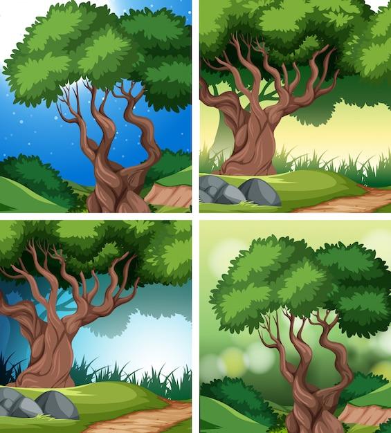 Set di sfondo foresta pluviale tropicale Vettore gratuito