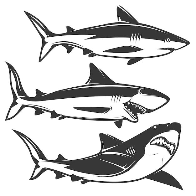 Set di squalo isolato su bianco Vettore Premium