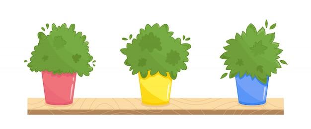 Set di tre piante in casa in diversi vasi colorati. illustrazione urbana del giardino di davanzale della cucina. collezione di erbe culinarie verde lussureggiante. su bianco Vettore Premium