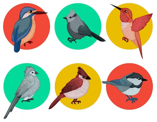 Set di uccelli colorati Vettore Premium