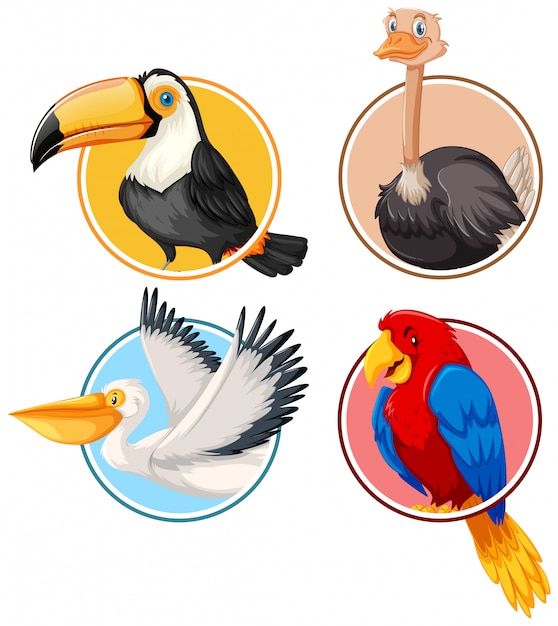 Set di uccelli in cerchio Vettore gratuito