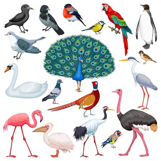 Set di uccelli Vettore Premium