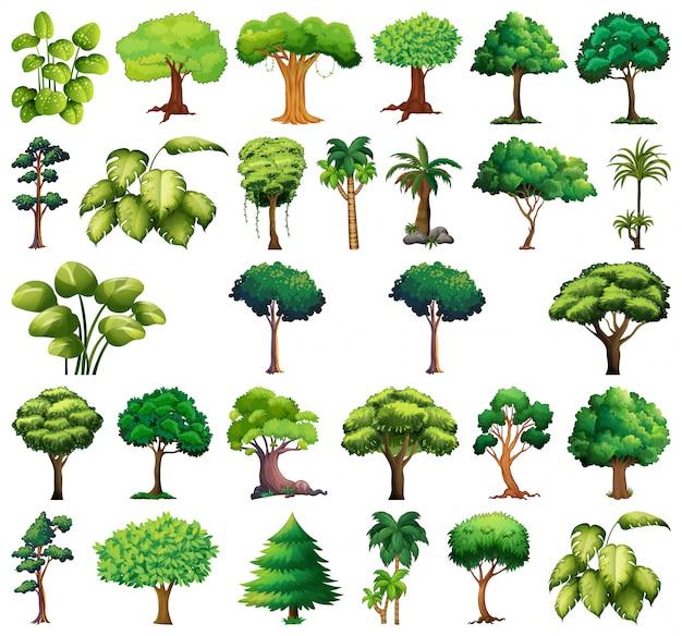 Set di varietà di piante e alberi Vettore gratuito
