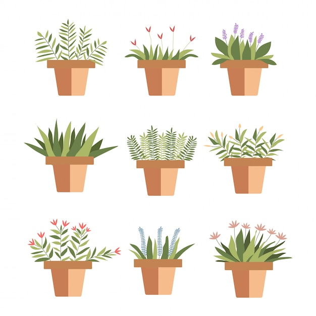 Set flower pot succulento stile schizzo. Vettore Premium
