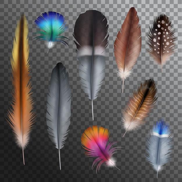 Set trasparente realistico di piume Vettore gratuito
