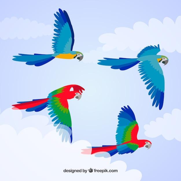 Sfondo con uccelli colorati Vettore gratuito