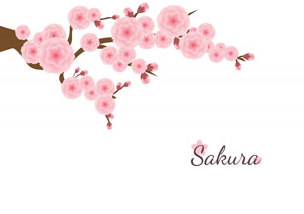 Sfondo di fiori di ciliegio. fiori rosa sakura Vettore Premium