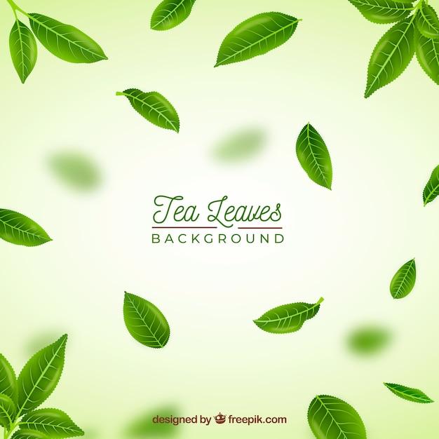 Sfondo di foglie di tè realistico Vettore gratuito