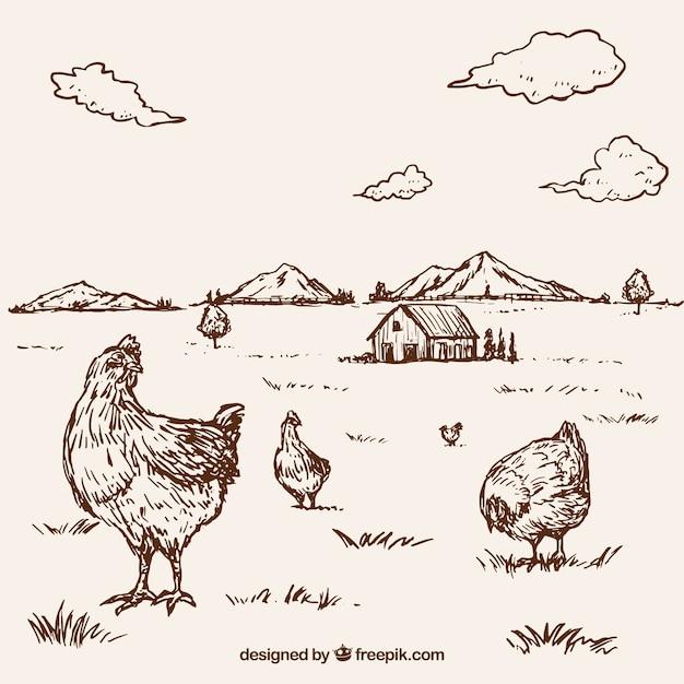 Sfondo di galline disegnate a mano in una fattoria for Progettazione di una fattoria industriale