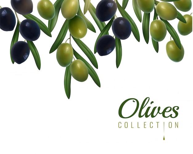 Sfondo di olive realistiche Vettore gratuito
