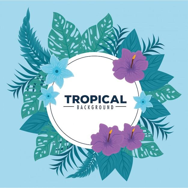 Sfondo tropicale, cornice circolare con ibisco, rami e foglie tropicali Vettore Premium