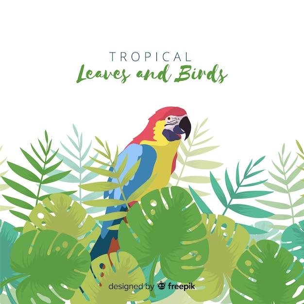 Sfondo uccello tropicale Vettore gratuito