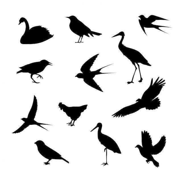 Siluette differenti delle icone degli uccelli isolate Vettore Premium