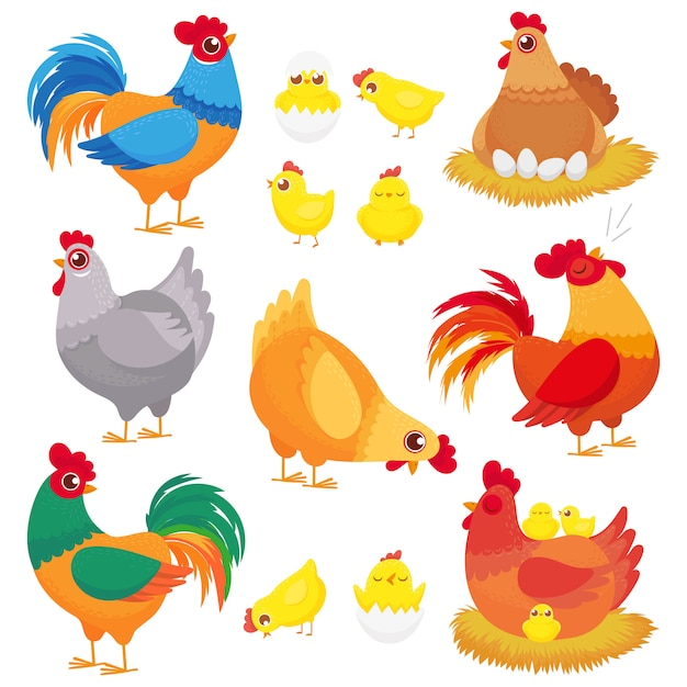 Simpatico pollo domestico, allevamento di galline, gallo di pollame e polli con pulcino, set di cartoni animati di galline Vettore Premium