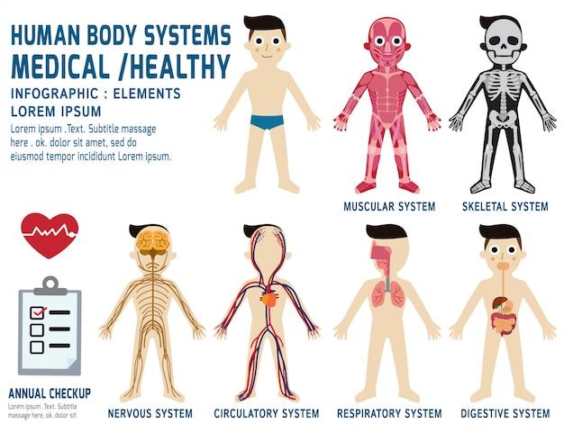 Sistema annuale di anatomia del corpo dei sistemi del corpo umano Vettore Premium