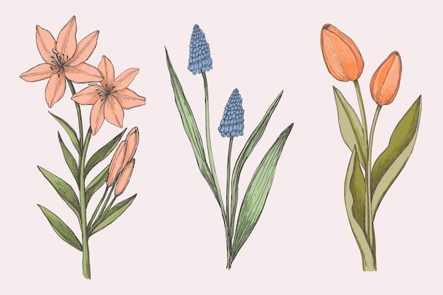 Sorteggio collezione di fiori botanica vintage Vettore gratuito
