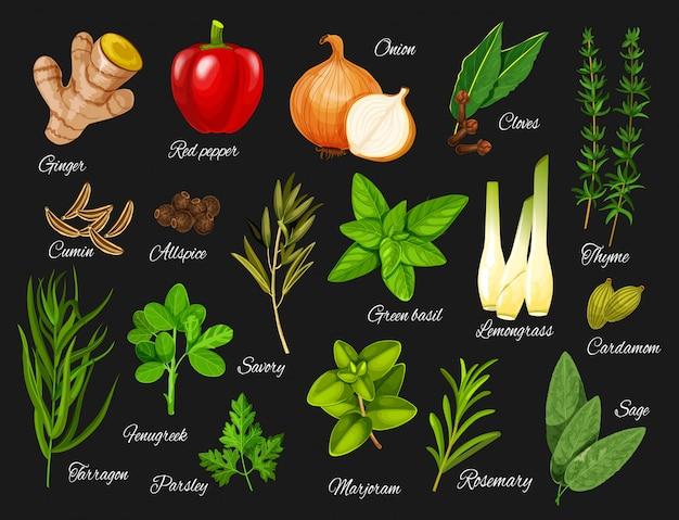 Spezie ed erbe verdi. condimenti alimentari naturali Vettore Premium