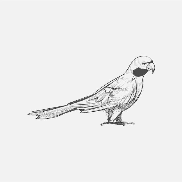 Stile di disegno dell'illustrazione del pappagallo Vettore Premium