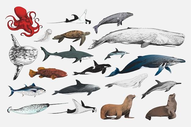 Stile di disegno dell'illustrazione della raccolta di vita marina Vettore gratuito