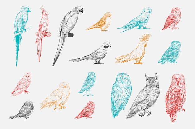 Stile di disegno illustrazione della collezione di uccelli pappagallo Vettore gratuito