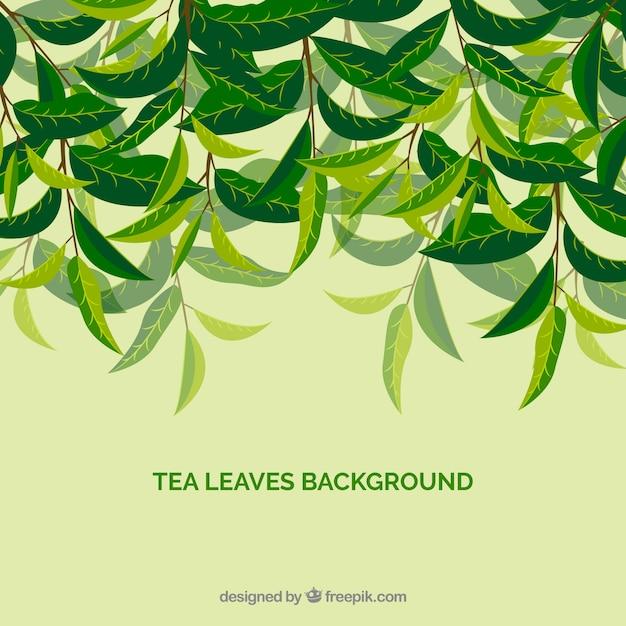 Stile disegnato del fondo delle foglie di tè a disposizione Vettore gratuito
