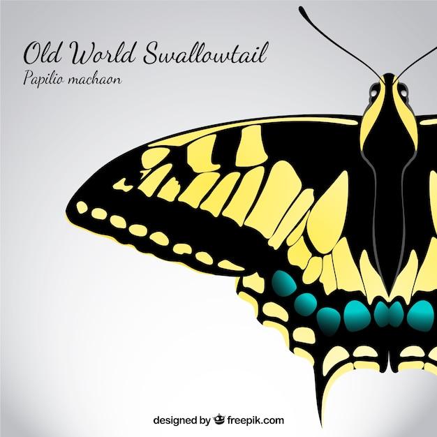 Swallowtail Vettore gratuito