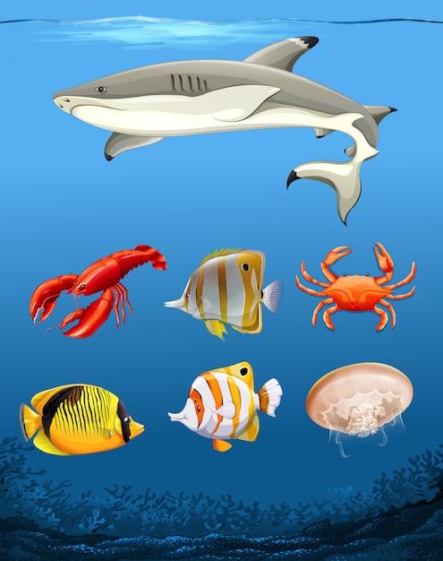 Tanti pesci sott'acqua Vettore Premium