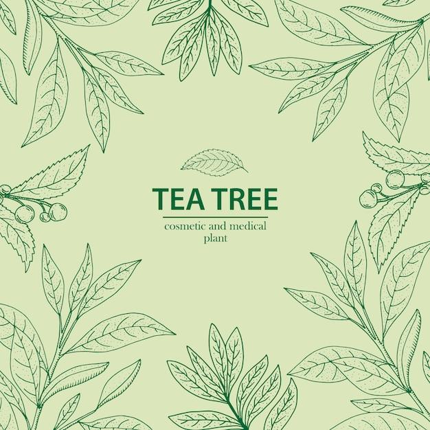 Tea tree. vettore disegnato a mano a base di erbe Vettore Premium