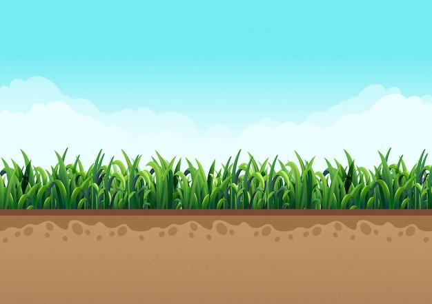 Terra con erba verde insieme a natura e cielo con belle nuvole. illustrazioni vettoriali Vettore Premium