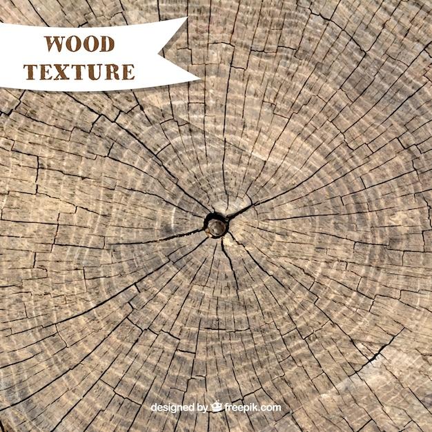 Texture di tronco d'albero cuted Vettore gratuito