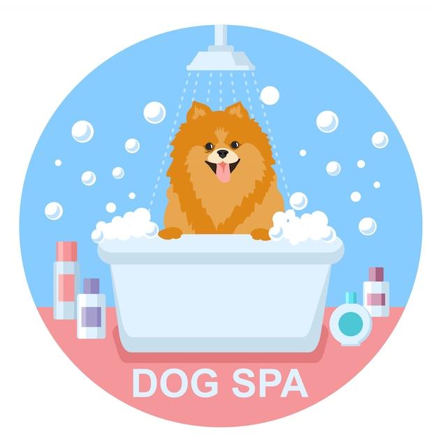 Toelettatura per cani. lavaggio dello spitz per cani. spa per cani Vettore Premium