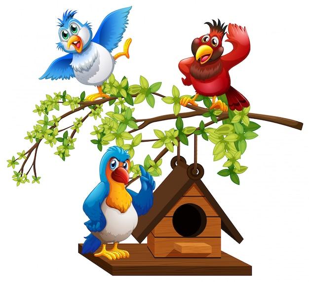 Tre pappagalli che volano intorno alla casetta per gli uccelli Vettore gratuito