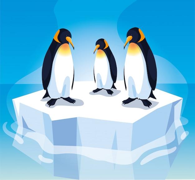 Tre pinguini su una banchisa alla deriva Vettore Premium