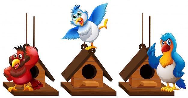 Tre uccelli del pappagallo del pappagallo in birdhouse Vettore Premium