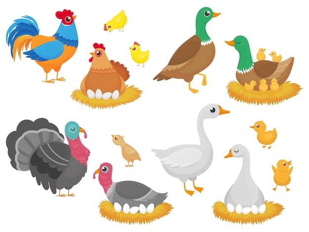 Uccelli da fattoria. il pollo del pollame, l'uccello dell'anatra dell'oca e il nido della famiglia del tacchino hanno messo l'insieme del fumetto Vettore Premium