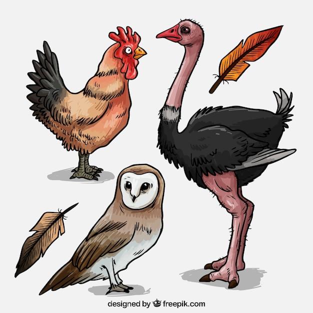 Uccelli disegnati a mano pacco Vettore gratuito