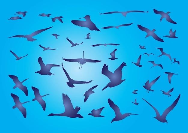 uccelli liberi Vettore gratuito