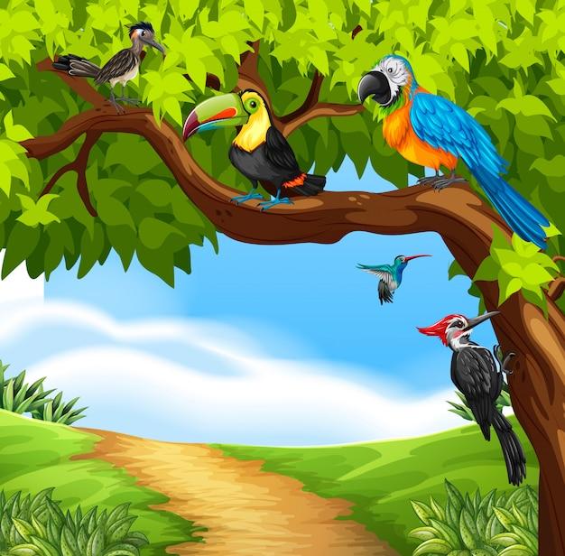 Uccelli selvatici sull'albero Vettore Premium