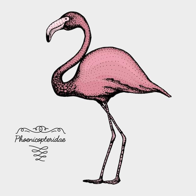 Uccello realistico disegnato a mano, stile grafico di schizzo, Vettore Premium