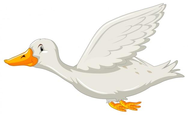 Un'anatra volante su backgrounf bianco Vettore Premium