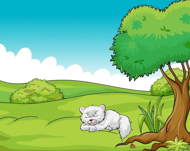 Un gatto che dorme Vettore gratuito