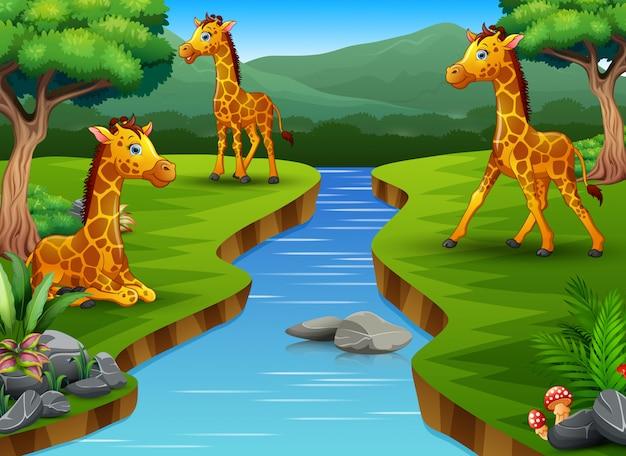 Un gruppo di giraffe godendo nella splendida natura Vettore Premium