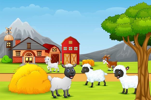 Un gruppo di pecore al paesaggio agricolo Vettore Premium