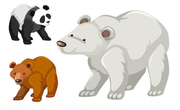 Un tipo di set di orsi Vettore gratuito