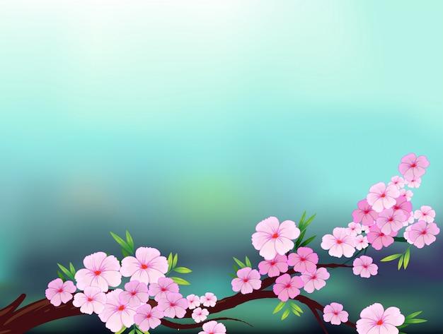 Carta Da Parati Fiori Di Ciliegio : Una cartoleria con fiori di ciliegio scaricare vettori premium