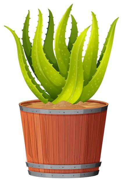Una pianta di aloe vera nella pentola Vettore Premium