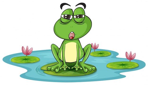 Una rana e un'acqua Vettore gratuito