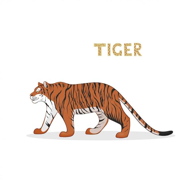 Una tigre cartone animato, isolata. animale. Vettore Premium