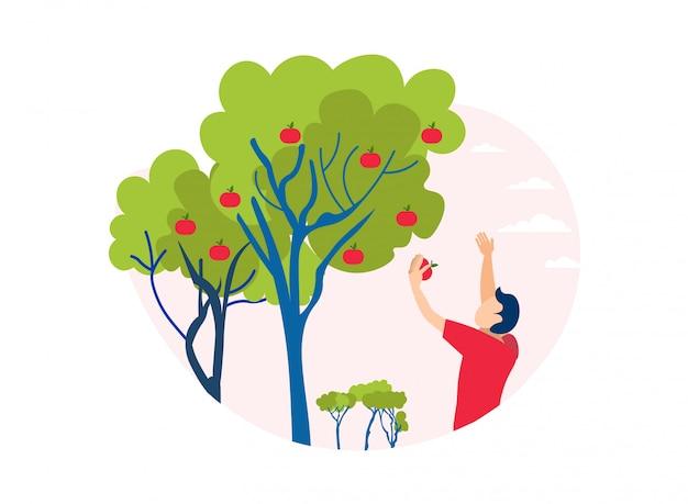 Uomo che seleziona apple fuori dall'illustrazione del ritaglio dell'albero Vettore Premium